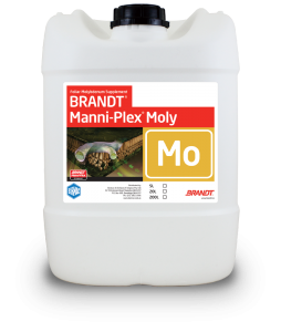 Brandt_Manni-Plex-Moly